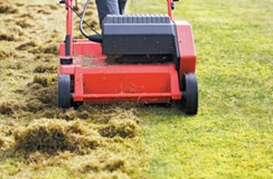 Lawn Care Services Marchwood UK